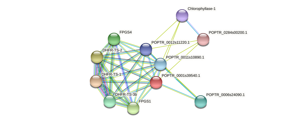 POPTR_0001s39540.1 protein (Populus trichocarpa) - STRING interaction network