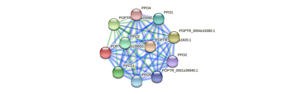 POPTR_0001s39650.1 protein (Populus trichocarpa) - STRING interaction network