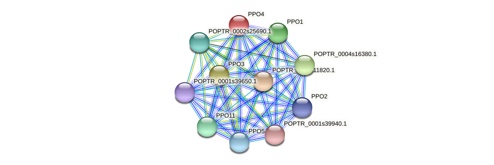 POPTR_0001s39680.1 protein (Populus trichocarpa) - STRING interaction network