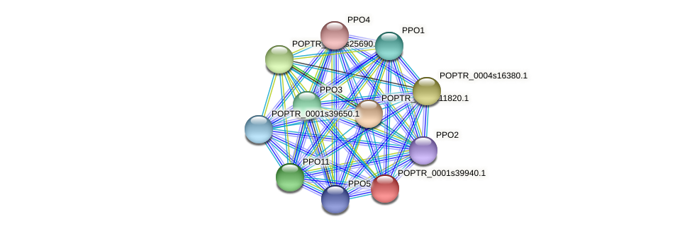 POPTR_0001s39940.1 protein (Populus trichocarpa) - STRING interaction network