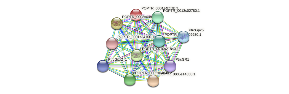 POPTR_0001s40510.1 protein (Populus trichocarpa) - STRING interaction network