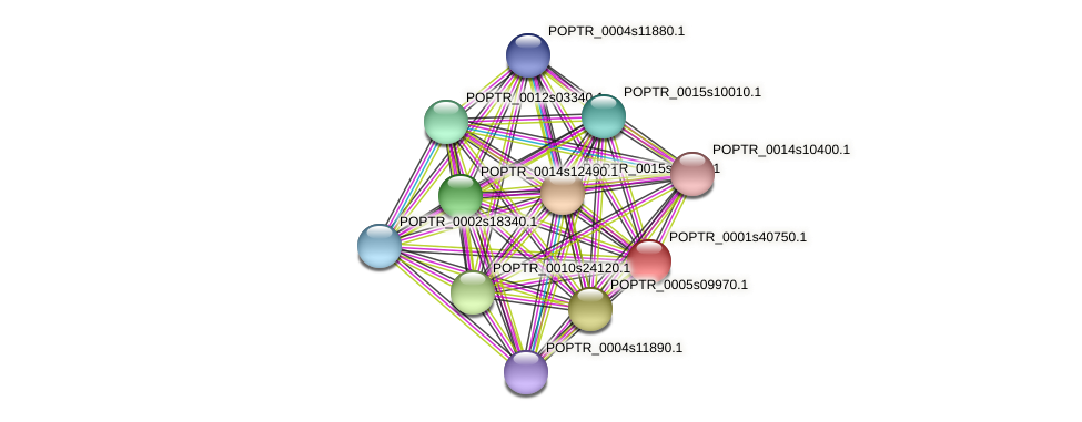 POPTR_0001s40750.1 protein (Populus trichocarpa) - STRING interaction network