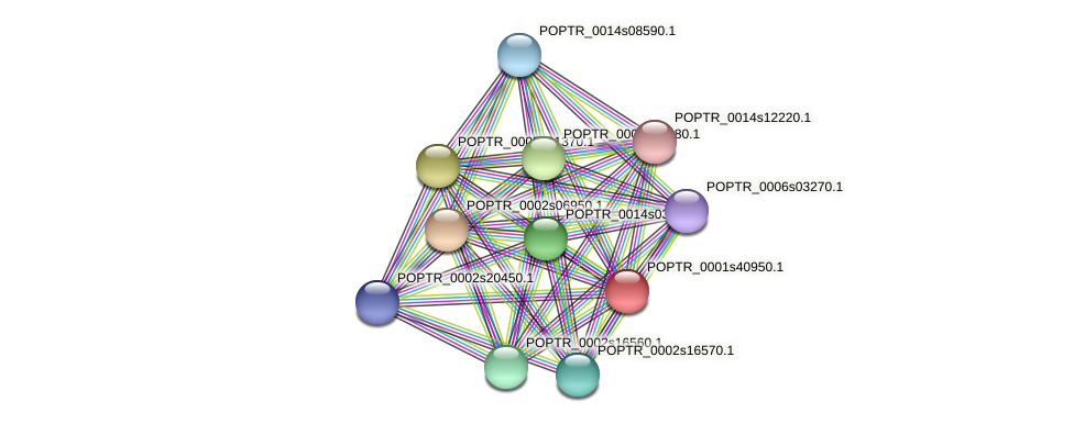 POPTR_0001s40950.1 protein (Populus trichocarpa) - STRING interaction network