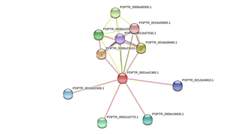 POPTR_0001s41360.1 protein (Populus trichocarpa) - STRING interaction network