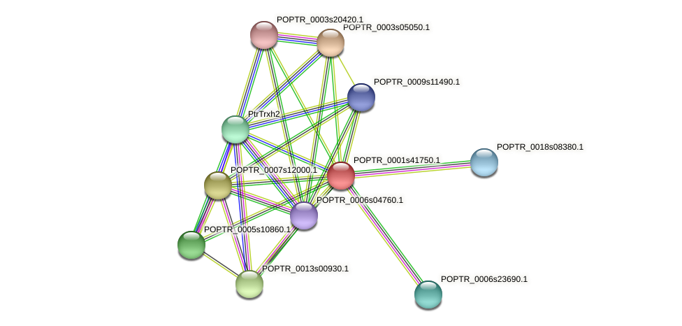 POPTR_0001s41750.1 protein (Populus trichocarpa) - STRING interaction network