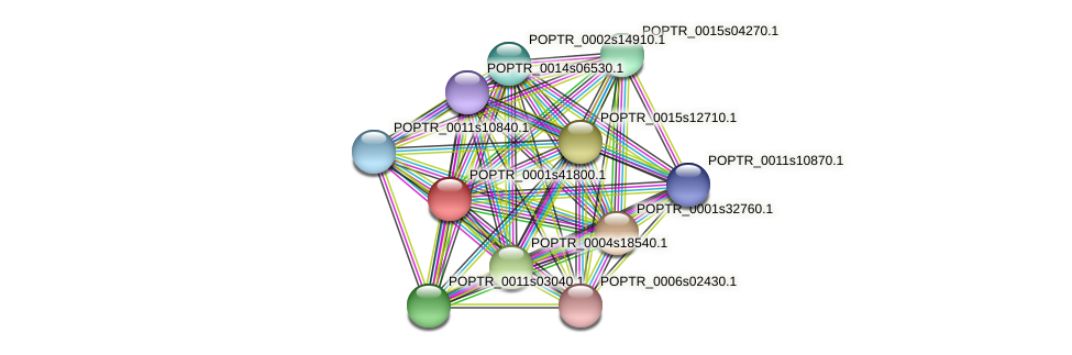 POPTR_0001s41800.1 protein (Populus trichocarpa) - STRING interaction network