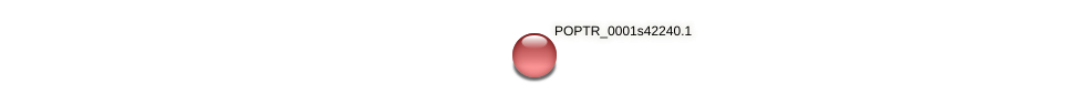 POPTR_0001s42240.1 protein (Populus trichocarpa) - STRING interaction network