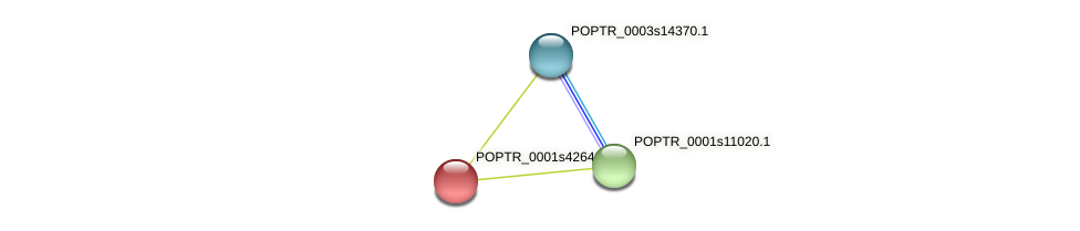 POPTR_0001s42640.1 protein (Populus trichocarpa) - STRING interaction network