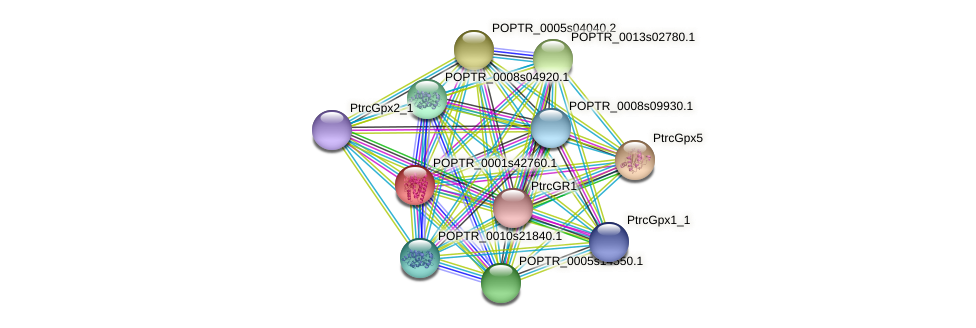 POPTR_0001s42760.1 protein (Populus trichocarpa) - STRING interaction network