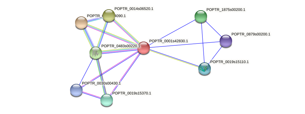 POPTR_0001s42830.1 protein (Populus trichocarpa) - STRING interaction network