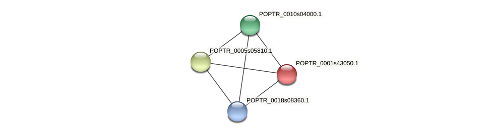 POPTR_0001s43050.1 protein (Populus trichocarpa) - STRING interaction network
