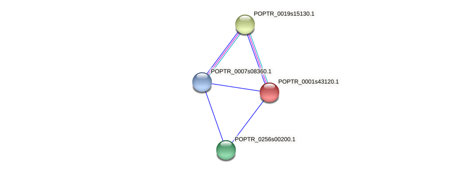 POPTR_0001s43120.1 protein (Populus trichocarpa) - STRING interaction network