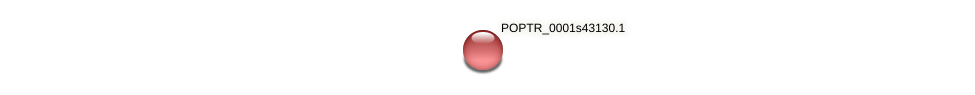 POPTR_0001s43130.1 protein (Populus trichocarpa) - STRING interaction network