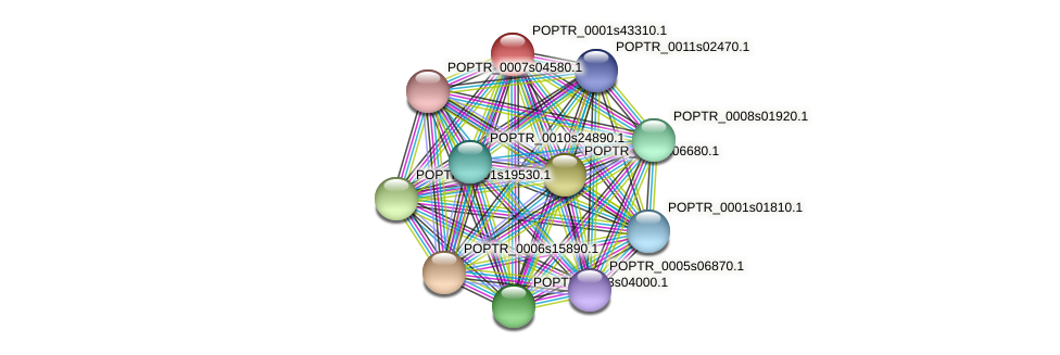 POPTR_0001s43310.1 protein (Populus trichocarpa) - STRING interaction network