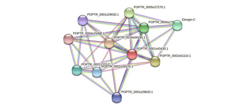 POPTR_0001s43430.1 protein (Populus trichocarpa) - STRING interaction network