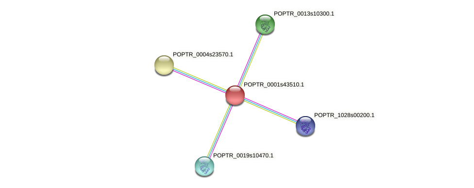 POPTR_0001s43510.1 protein (Populus trichocarpa) - STRING interaction network