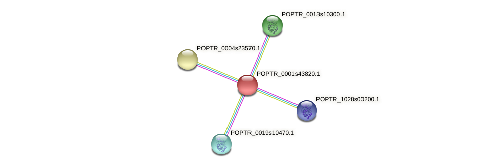 POPTR_0001s43820.1 protein (Populus trichocarpa) - STRING interaction network