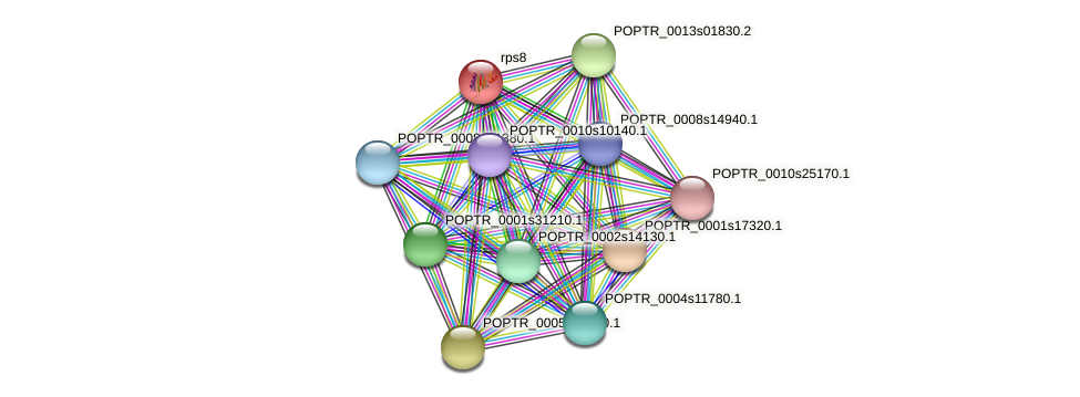 POPTR_0001s44060.1 protein (Populus trichocarpa) - STRING interaction network
