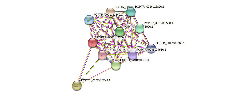 POPTR_0001s44640.1 protein (Populus trichocarpa) - STRING interaction network