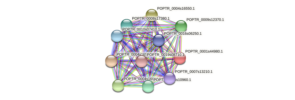 POPTR_0001s44980.1 protein (Populus trichocarpa) - STRING interaction network