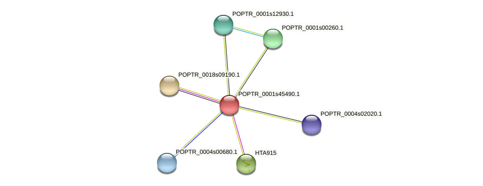 POPTR_0001s45490.1 protein (Populus trichocarpa) - STRING interaction network
