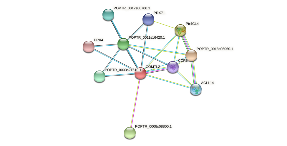 POPTR_0001s45530.1 protein (Populus trichocarpa) - STRING interaction network