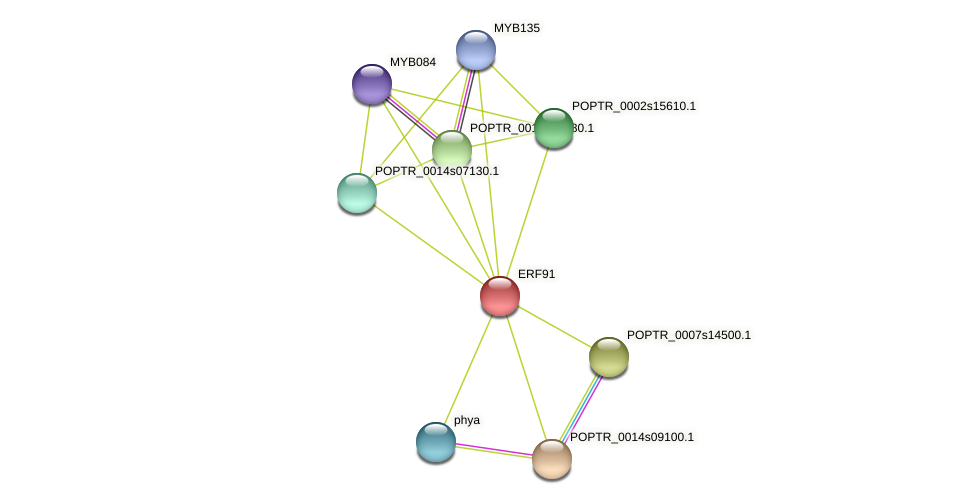 POPTR_0001s45740.1 protein (Populus trichocarpa) - STRING interaction network