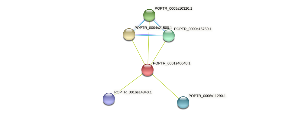 POPTR_0001s46040.1 protein (Populus trichocarpa) - STRING interaction network
