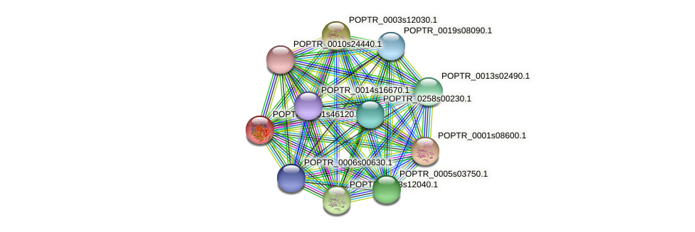 POPTR_0001s46120.1 protein (Populus trichocarpa) - STRING interaction network