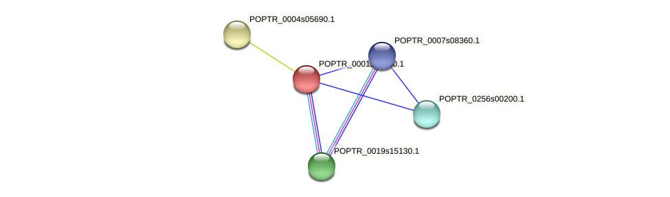 POPTR_0001s46360.1 protein (Populus trichocarpa) - STRING interaction network