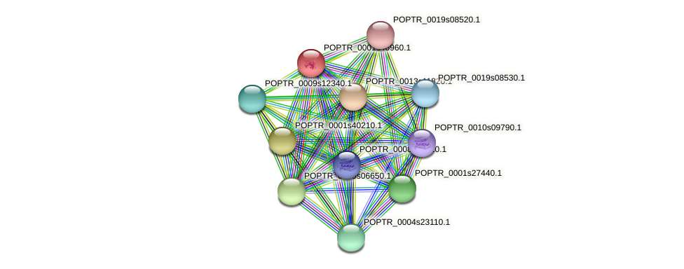POPTR_0001s46960.1 protein (Populus trichocarpa) - STRING interaction network