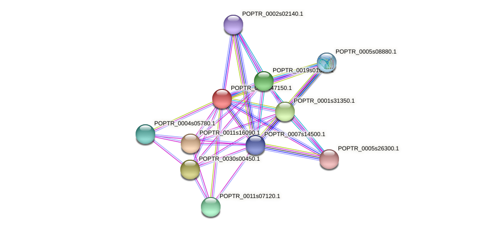 POPTR_0001s47150.1 protein (Populus trichocarpa) - STRING interaction network