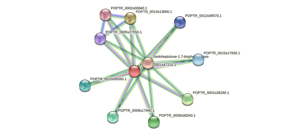 POPTR_0001s47210.1 protein (Populus trichocarpa) - STRING interaction network