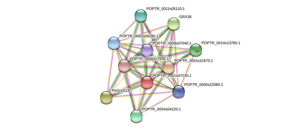 POPTR_0001s47230.1 protein (Populus trichocarpa) - STRING interaction network