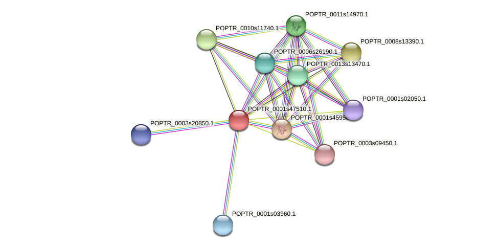 POPTR_0001s47510.1 protein (Populus trichocarpa) - STRING interaction network
