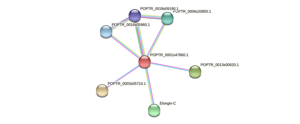 POPTR_0001s47860.1 protein (Populus trichocarpa) - STRING interaction network
