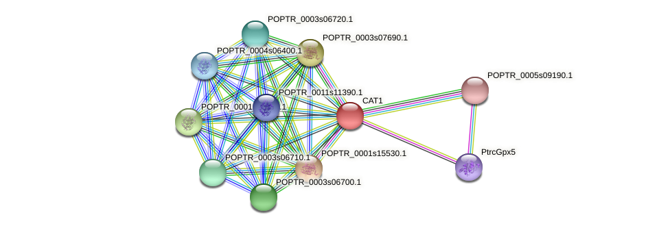 POPTR_0002s01080.1 protein (Populus trichocarpa) - STRING interaction network