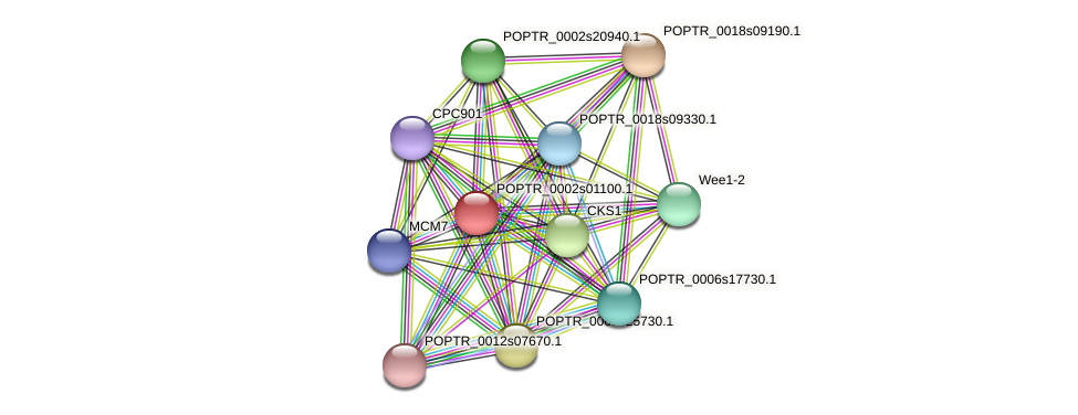 POPTR_0002s01100.1 protein (Populus trichocarpa) - STRING interaction network