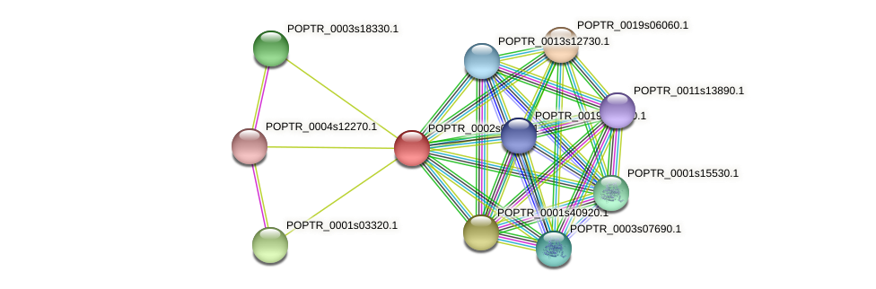 POPTR_0002s01160.1 protein (Populus trichocarpa) - STRING interaction network
