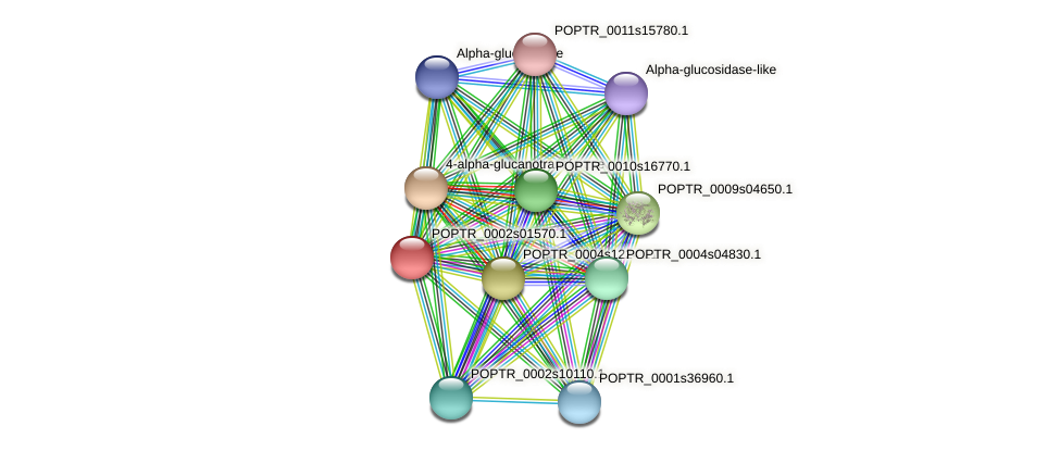 POPTR_0002s01570.1 protein (Populus trichocarpa) - STRING interaction network