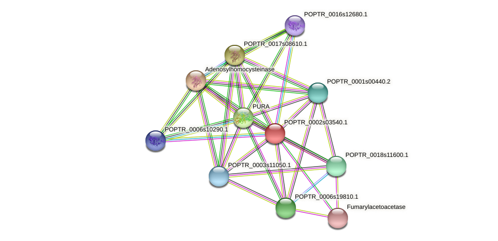 POPTR_0002s03540.1 protein (Populus trichocarpa) - STRING interaction network