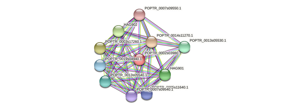 POPTR_0002s03980.1 protein (Populus trichocarpa) - STRING interaction network