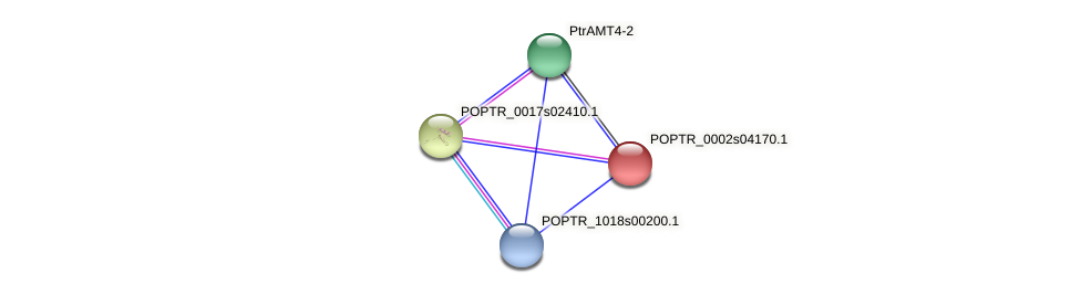 POPTR_0002s04170.1 protein (Populus trichocarpa) - STRING interaction network