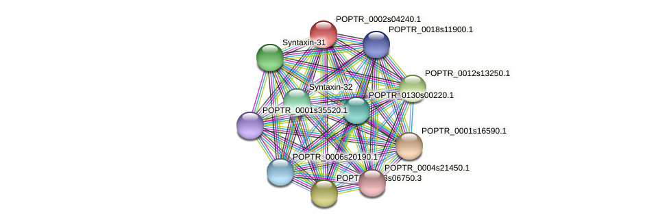 POPTR_0002s04240.1 protein (Populus trichocarpa) - STRING interaction network
