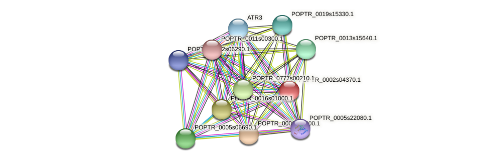 POPTR_0002s04370.1 protein (Populus trichocarpa) - STRING interaction network