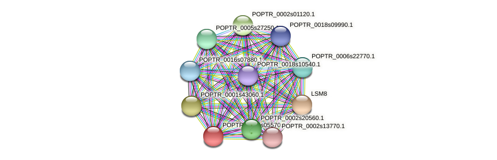 POPTR_0002s05570.1 protein (Populus trichocarpa) - STRING interaction network