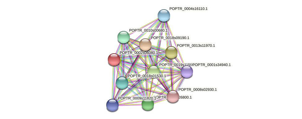 POPTR_0002s06080.1 protein (Populus trichocarpa) - STRING interaction network