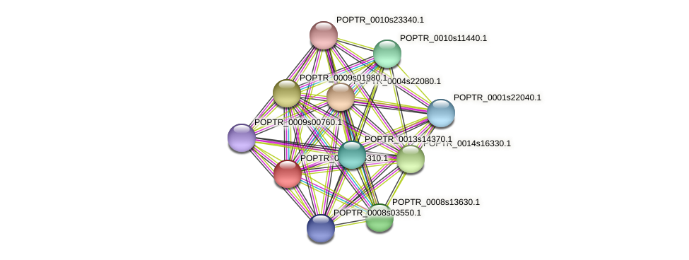 POPTR_0002s06310.1 protein (Populus trichocarpa) - STRING interaction network