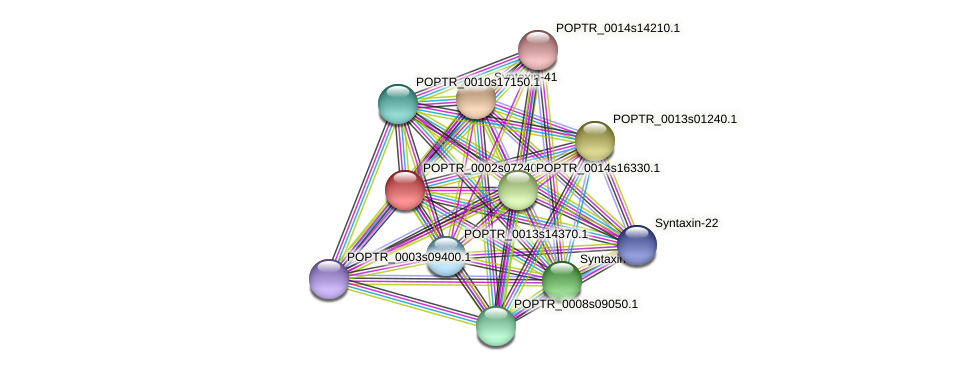 POPTR_0002s07240.1 protein (Populus trichocarpa) - STRING interaction network