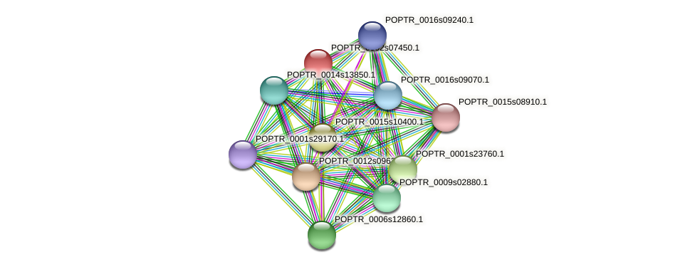POPTR_0002s07450.1 protein (Populus trichocarpa) - STRING interaction network